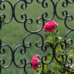 Rankgitter für Rosenpavillon berankt mit Rosen