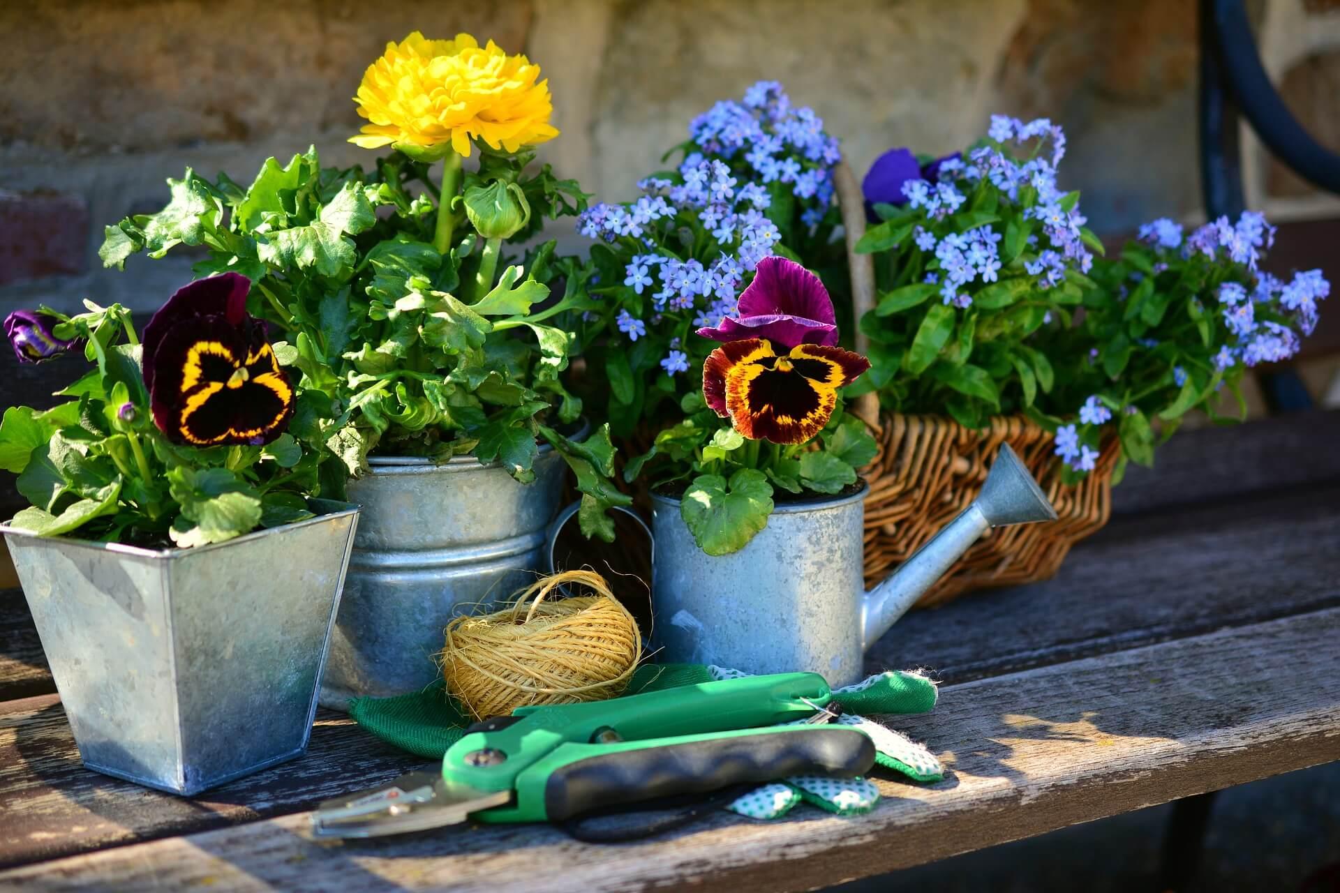 Pflanzen auf Holztisch Gartenarbeit